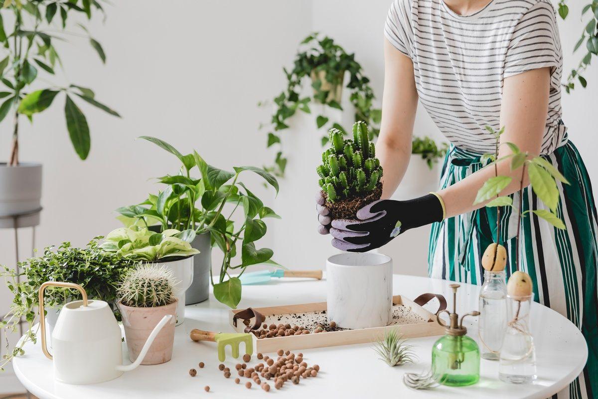 Pielęgnacja roślin domowych pomaga łagodzić objawy depresji, koi nerwy i uspokaja