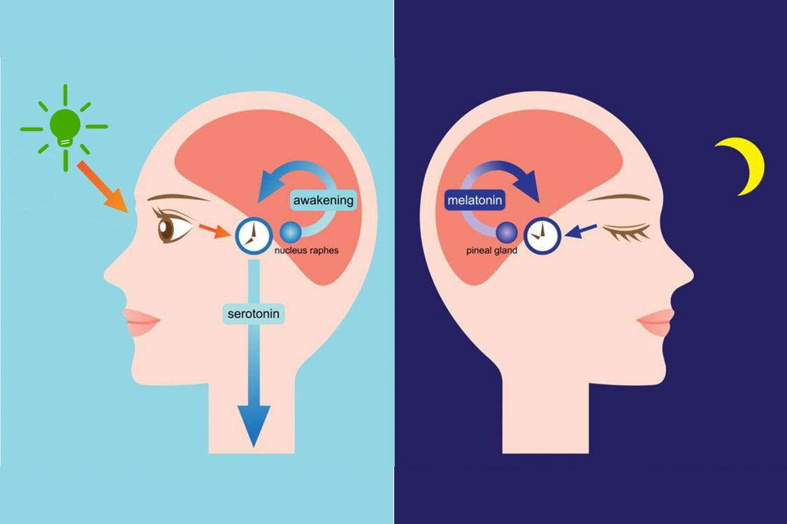 Wpływ światła na hormony