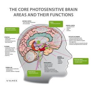 Valkee - obszary światłoczułe mózgu